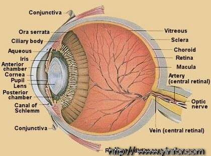 Eye_Anatomy-Anat.jpg